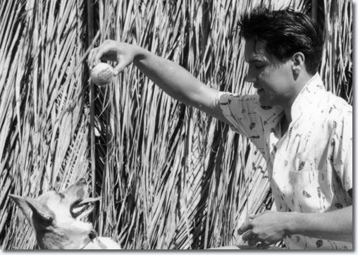 Elvis Presley - Blue Hawaii : Paramount 1961