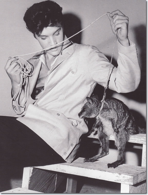 Elvis Presley with a baby Wallaby on the set of Jailhouse Rock